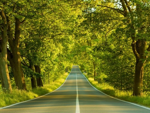 Nature_Forest_Road_to_the_sunny_forest_017015_.jpg